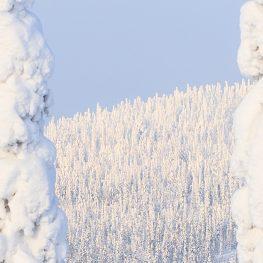 Syöte, Pikku-Syöte, talvi, talviloma, laskettelu, lumilautailu, perheloma, loma